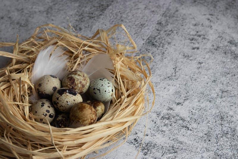 Een groep kwartelseieren ligt in een nest van stro op licht beton De ruimte van het exemplaar royalty-vrije stock fotografie