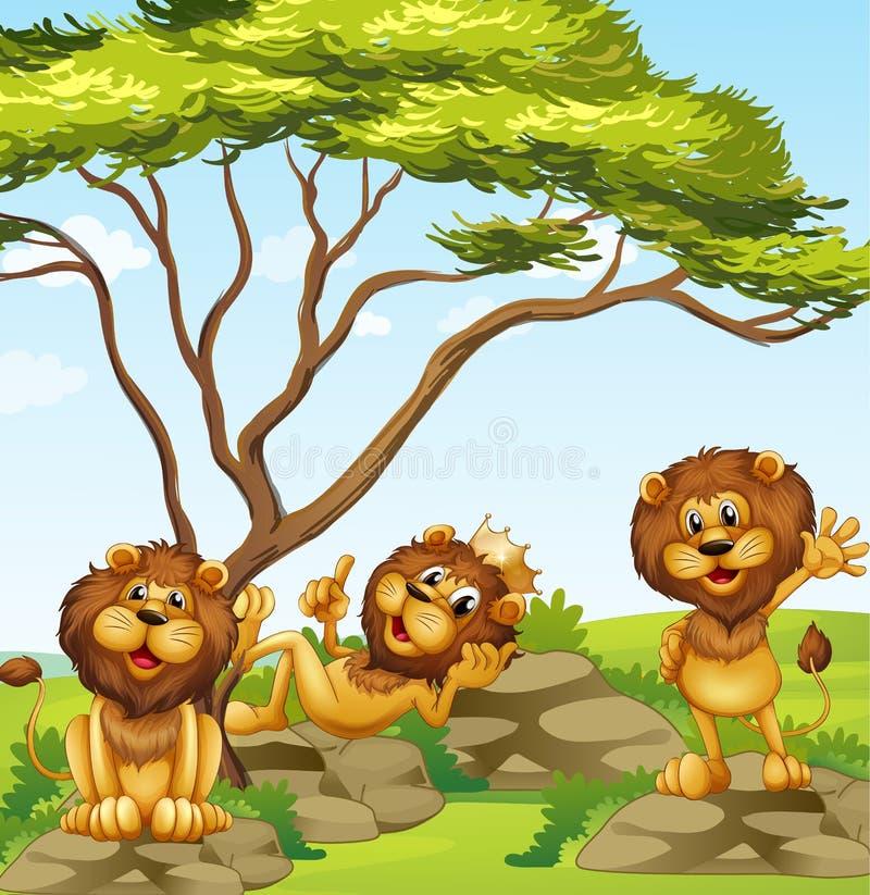 Een groep leeuwen vector illustratie