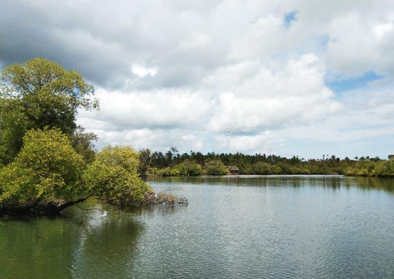 Een groep mangroven die slechts u in Filippijnen kunt zien stock afbeeldingen