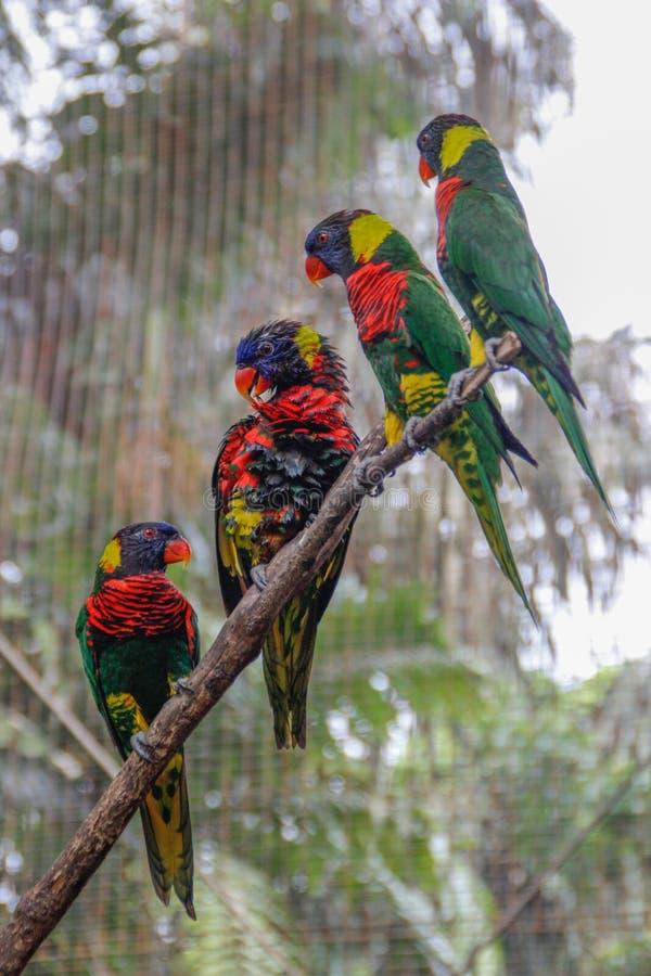 Een groep mooie gekleurde papegaaien zit in een kooi in Vogelpark royalty-vrije stock foto