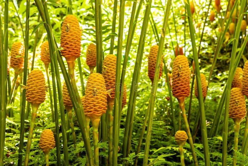Een groep mooie oranje en gele maracas bloeit royalty-vrije stock foto