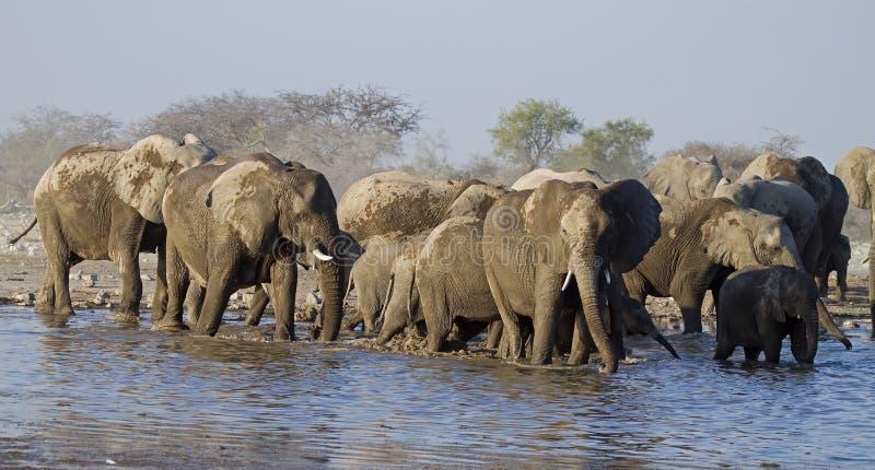 Een groep Olifanten bij waterhole royalty-vrije stock afbeeldingen