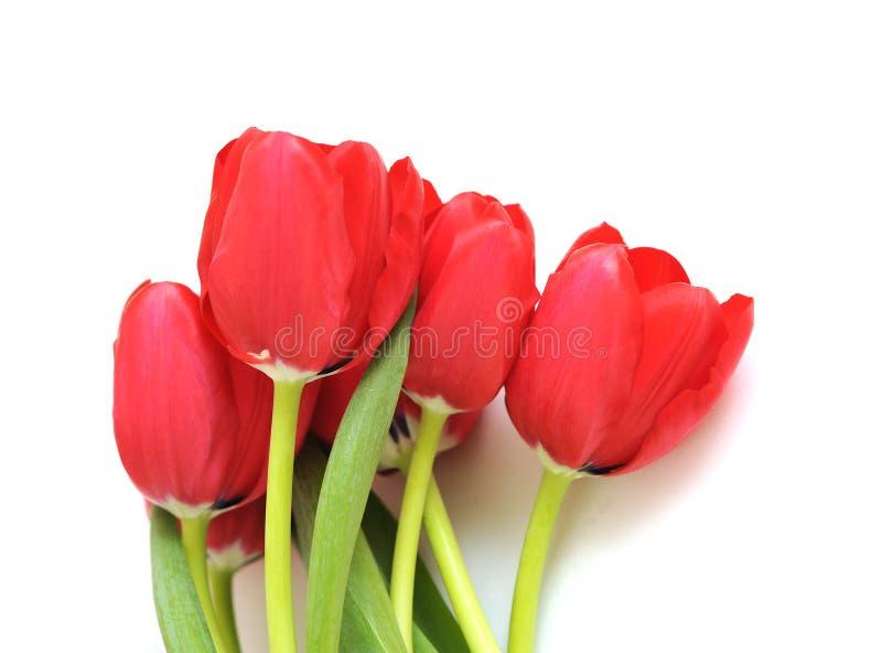 Download Een groep rode tulp stock afbeelding. Afbeelding bestaande uit moeders - 29511147