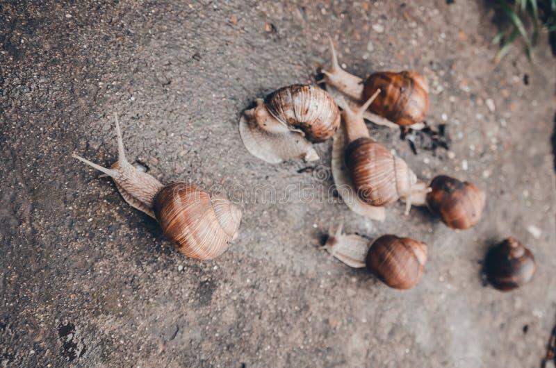 Een groep slakken in openlucht ter plaatse stock afbeelding