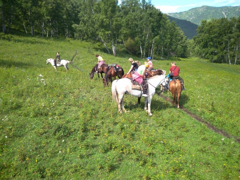 Een groep toeristen gaat horseback het berijden in paardrijdenreis in de Altai-zomer van 2018 van de bergenreis stock foto