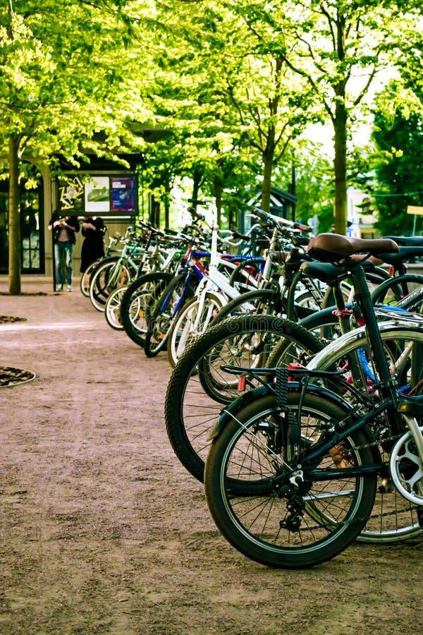 een groot aantal fietsen op het gazon stock afbeeldingen