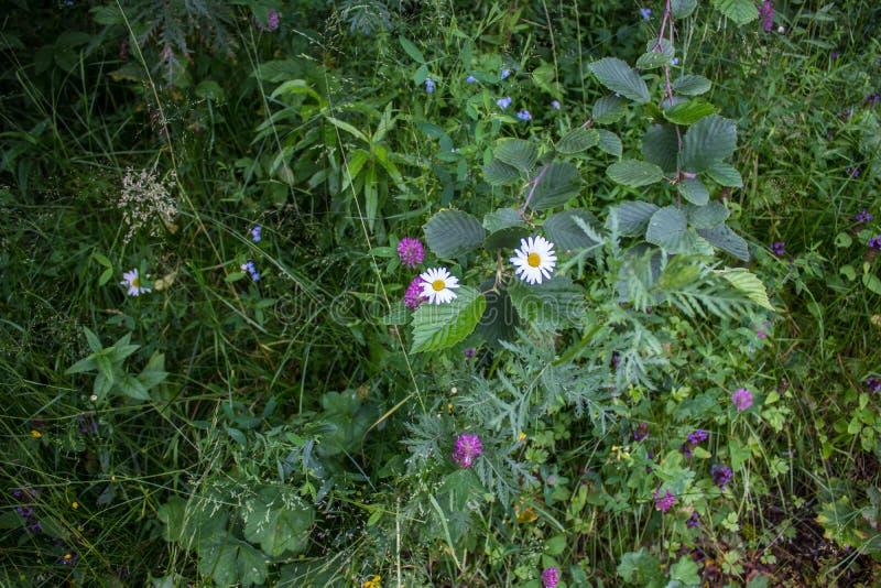 Een groot aantal kruiden en bloemen in de middensteeg royalty-vrije stock afbeeldingen