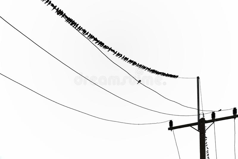 Een groot aantal vogels is op de machtslijn Op plattelandsgebieden, in zonsondergangtijd vector illustratie
