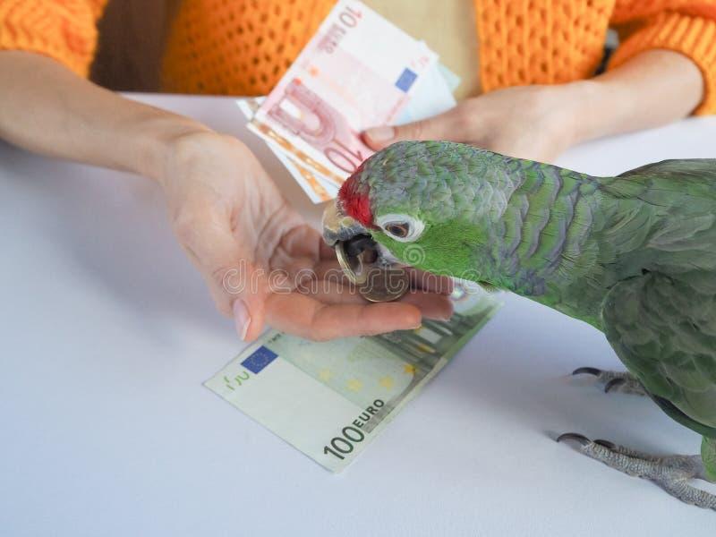 Een groot groen Euro geld van de papegaaitelling Grappige papegaai - financier stock foto
