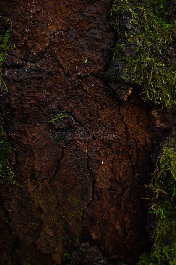 Een groot hol sneed in een boomboomstam met groene mosachtergrond royalty-vrije stock foto's