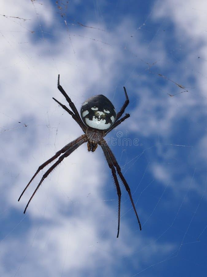 Een groot spinneweb op de Kalalau-Sleep stock fotografie