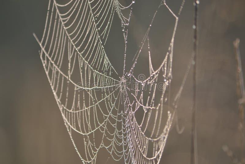 Een groot Web op het gebied bloeide stock foto's