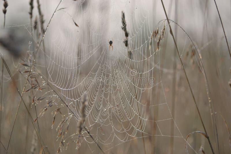 Een groot Web op het gebied bloeide stock fotografie