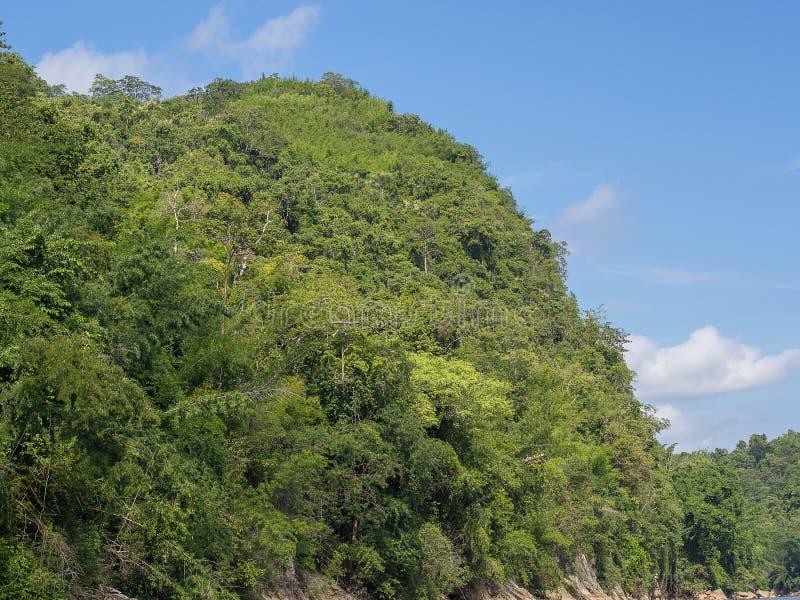 Een grote berg die met bomen met de blauwe hemelachtergrond lo wordt gevuld stock afbeeldingen