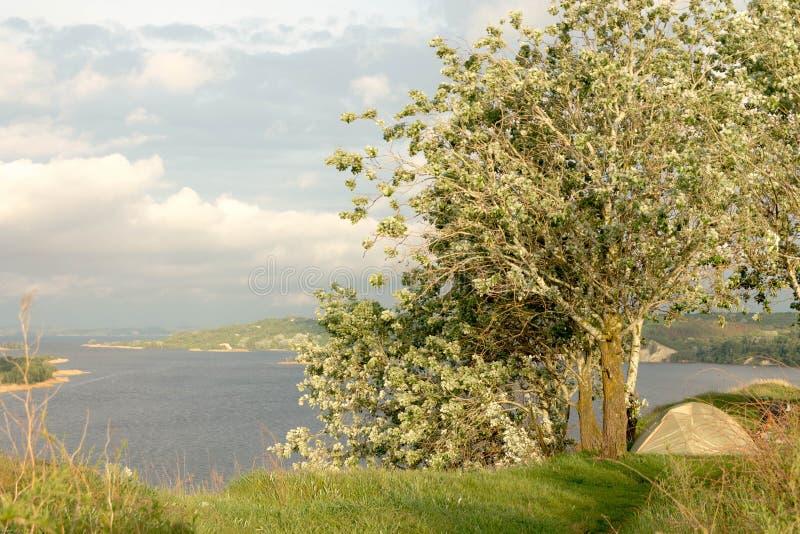 Een grote boom boven de rivier Toeristentent onder de boom Rust op de rivierbank landschappen stock foto's