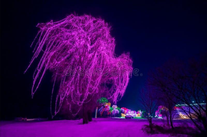 Een grote die boom met purpere lichten wordt verfraaid stock afbeelding