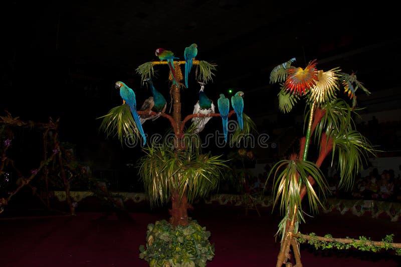 Een grote groep heldere kleurrijke circuspauwen en papegaaien op een zwarte achtergrond in het circuslandschap op de achtergrond  stock foto