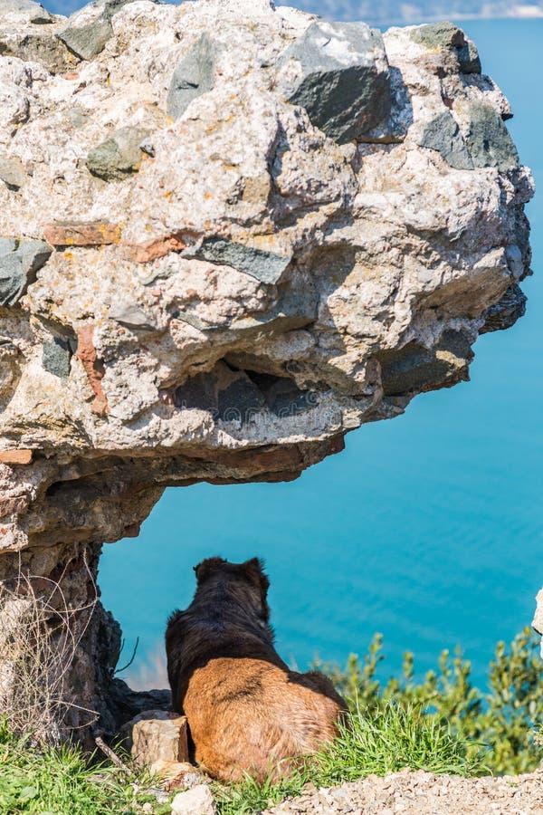 Een grote hond ligt in de schaduw onder een steen en bekijkt het overzees in Istanboel, Turkije royalty-vrije stock fotografie