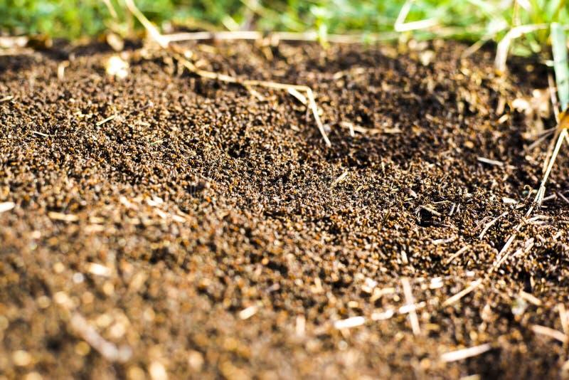 Een grote hoop van termieten, termieten eet rotte bomen stock afbeeldingen