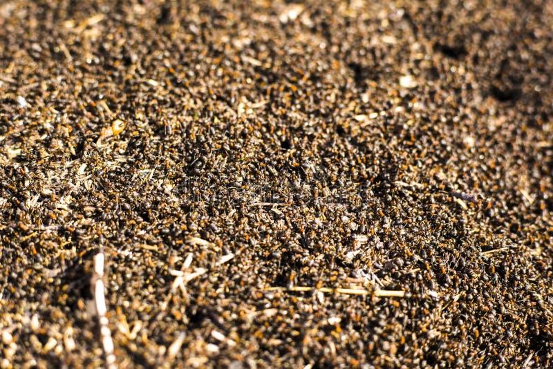 Een grote hoop van termieten, termieten eet rotte bomen stock fotografie