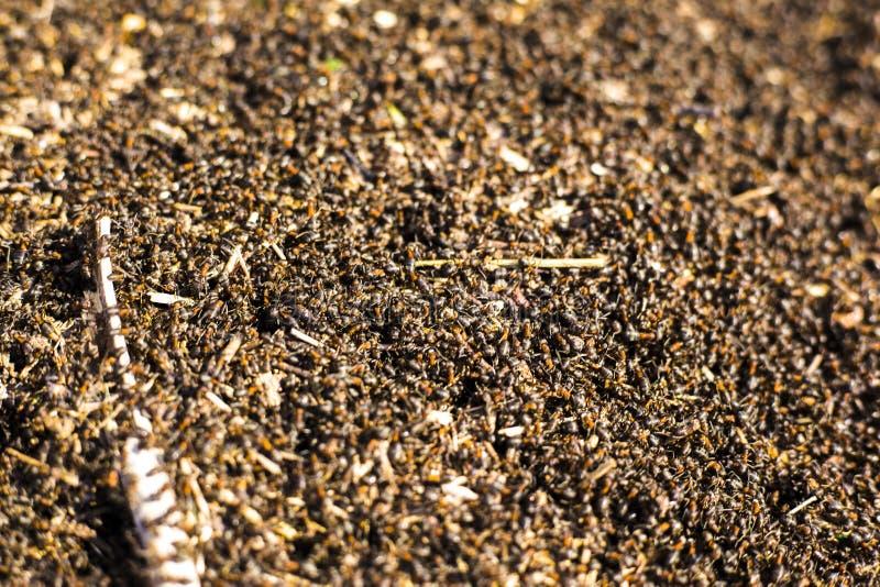 Een grote hoop van termieten, termieten eet rotte bomen royalty-vrije stock fotografie