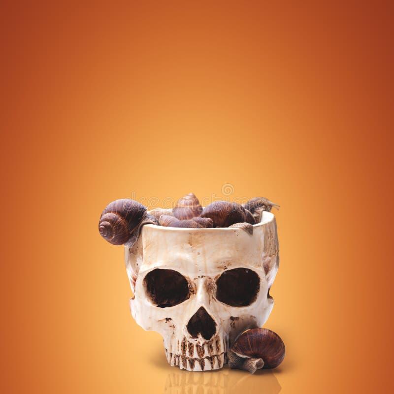 Een grote kom van menselijke die schedel met slakken wordt gevuld royalty-vrije stock fotografie