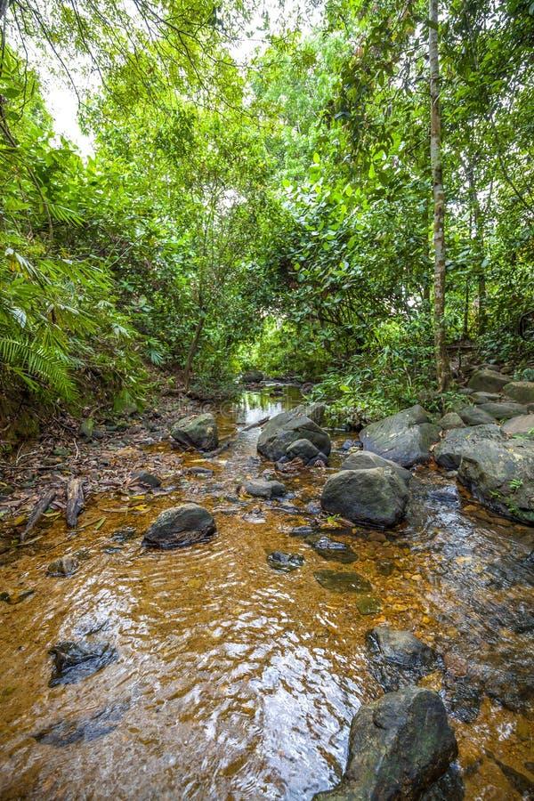 Een grote kreek met heel wat stenen en rotsen en duidelijk water stock foto's