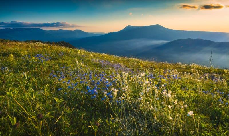 Een grote mening van bloeiende bergvallei bij zonsondergang stock fotografie