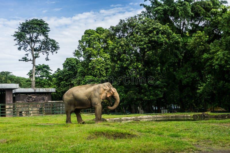 Een grote olifant in kooi het omringen door omheining en bomen en mooie hemel als foto als achtergrond die in Ragunan-dierentuin  royalty-vrije stock foto's
