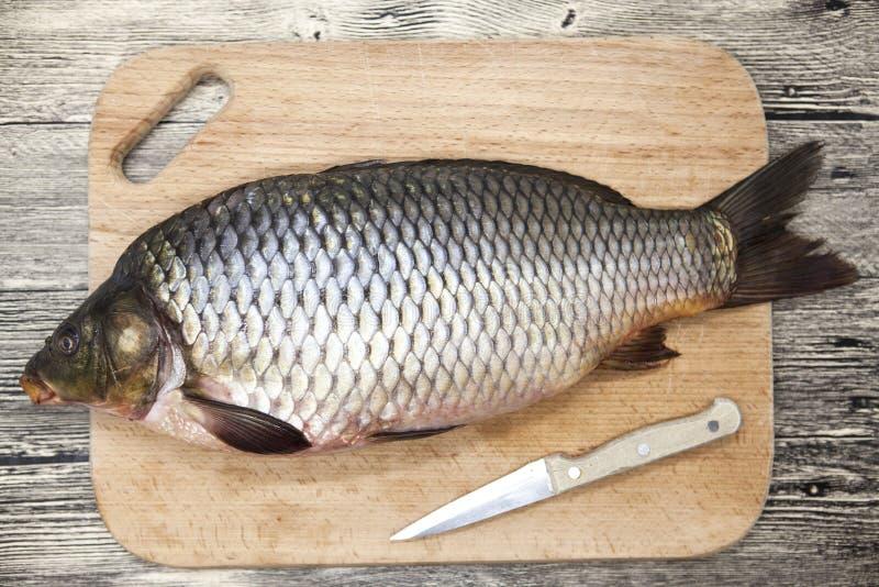 Een grote verse karper levende vis die op een houten raad met een mes liggen royalty-vrije stock fotografie