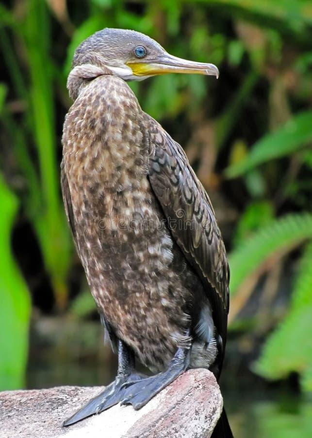 Een grote watervogel op een steen royalty-vrije stock foto's