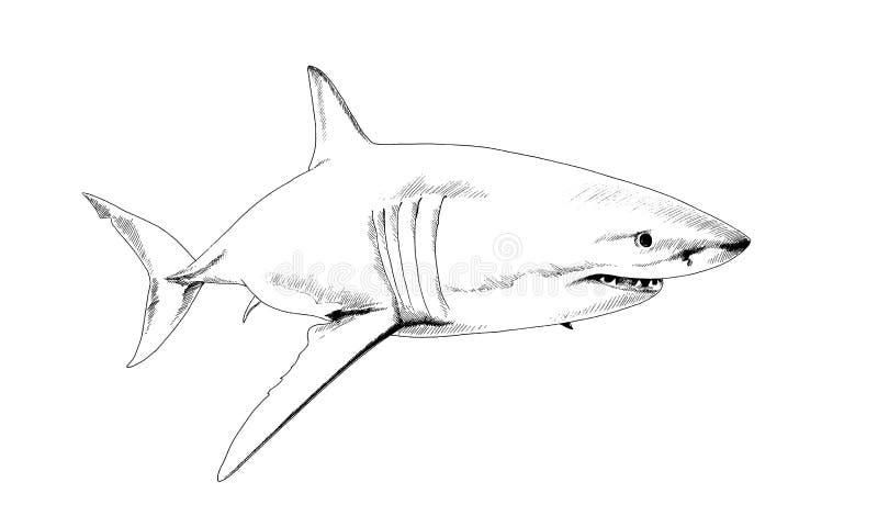 Een haai in inkt op een witte achtergrond wordt getrokken die royalty-vrije stock foto's