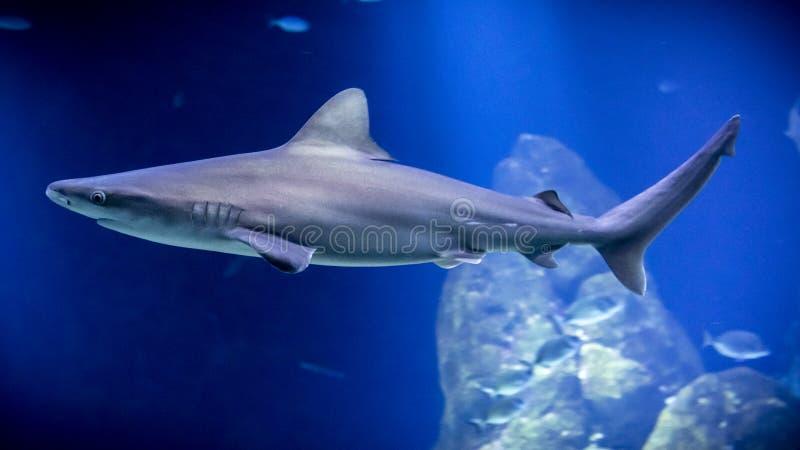 Een haai met hierboven stralen van licht van stock fotografie