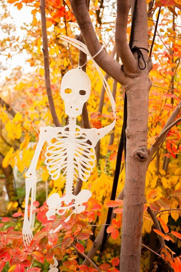Een Halloween-skeletdecoratie die in een boom met kleurrijke bladeren op de achtergrond hangen royalty-vrije stock fotografie