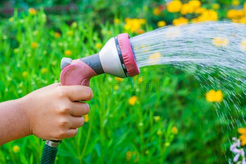 Een hand met een sproeier, die wateren de gele bloemen in de tuin ondiepe velddiepte stock fotografie