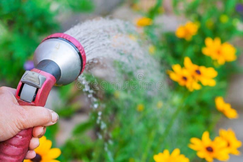 Een hand met spuitpistool, water geven gele bloemen stock foto