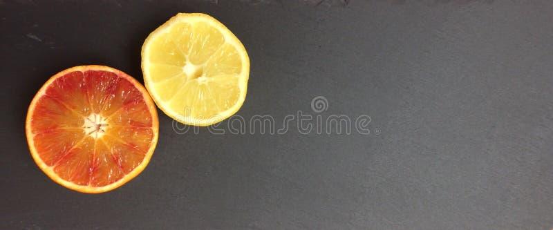 Een hand van het elengat nog-leven die met gekleurde potloden wordt getrokken stock afbeelding