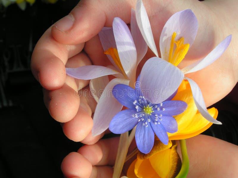 Een handvol van de lente royalty-vrije stock foto's