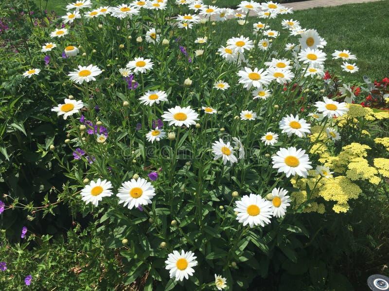 een hart van mooie bloemen stock afbeeldingen
