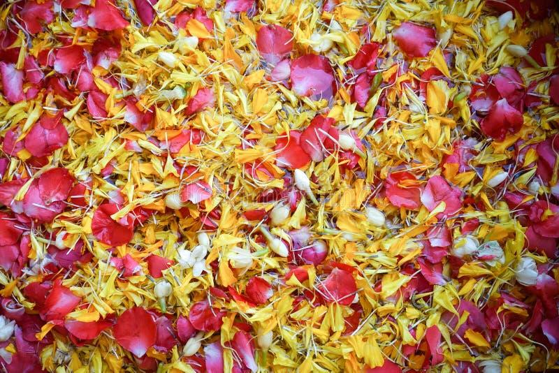 Een heilig die water van zoet water het uitspreiden door bloembloemblaadjes wordt gemaakt, voor het gieten op de oudere hand van  royalty-vrije stock afbeelding