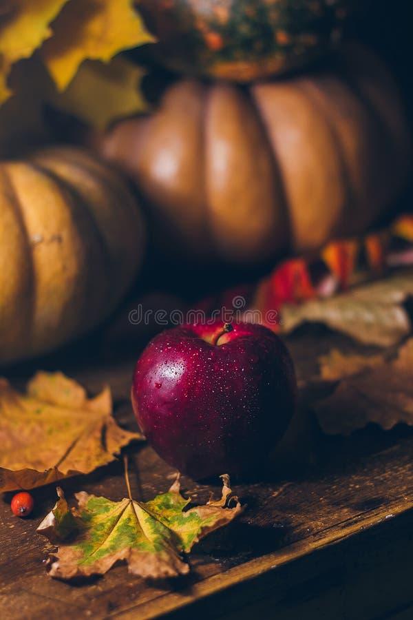 Een heldere rode appel met de dalingen van water op de rustieke houten achtergrond met de pompoenen en de esdoorn gaat weg stock foto's