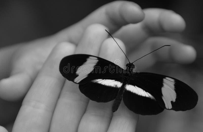 Een helpende hand met een vlinder stock afbeeldingen