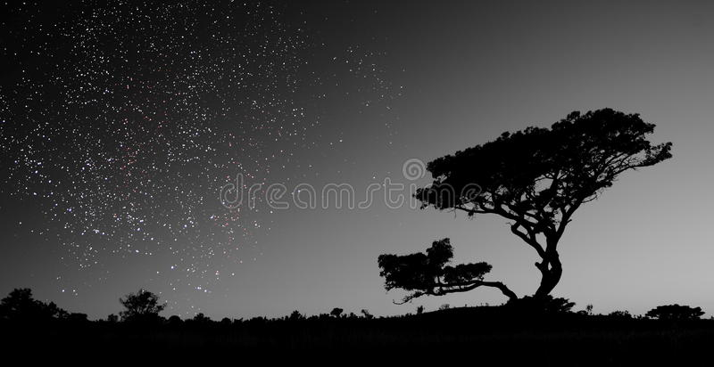 Een hemelhoogtepunt van sterren