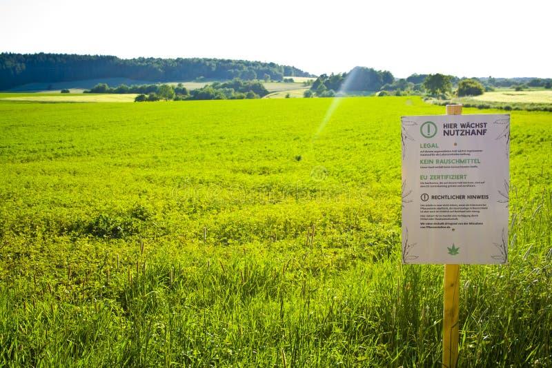 Een hennepgebied in Hesse, m Duitsland Wettelijke hennepcultuur voor geneeskunde of voedsel stock fotografie
