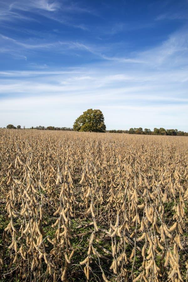 Een het landbouwbedrijfgebied van Missouri van sojabonen stock foto