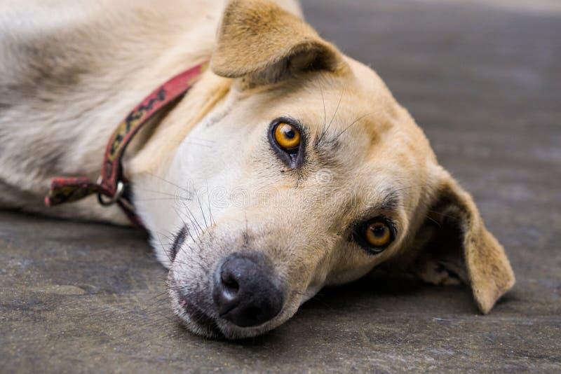 Een het liggen hond royalty-vrije stock afbeelding