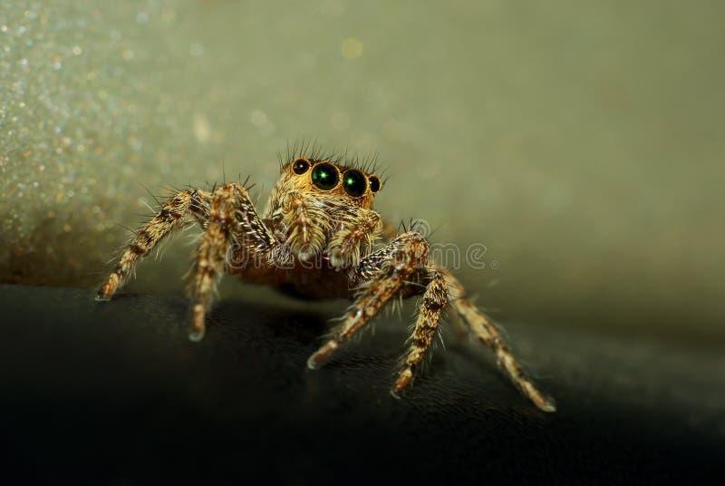 Een het springen spin met sparkly ogen stock foto's