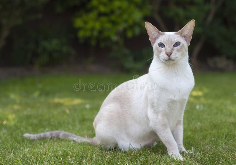 Een het stellen kat royalty-vrije stock fotografie