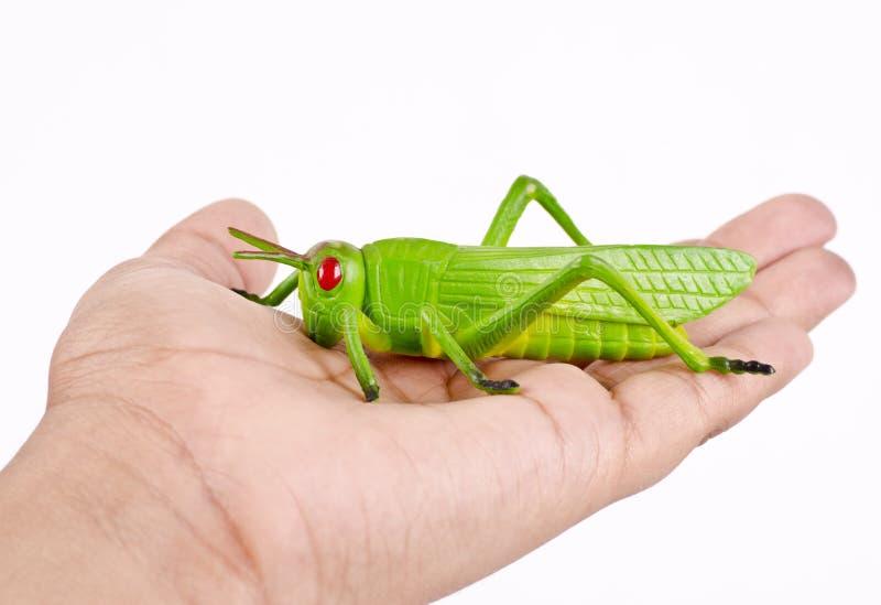 Een het stuk speelgoed van de handholding plastic sprinkhaneninsect royalty-vrije stock foto