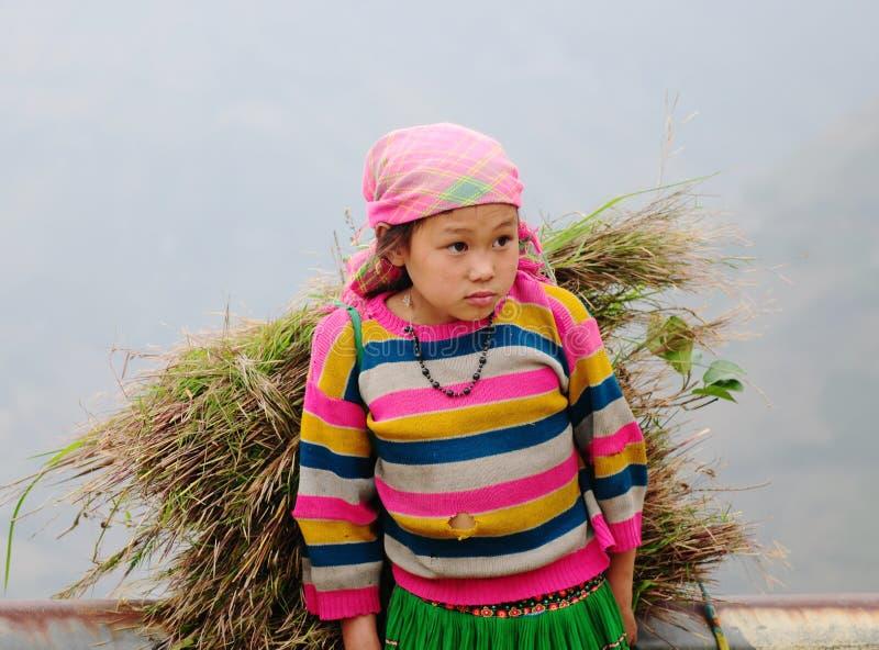 Een Hmong-meisjes dragend gras op de landelijke weg bij Sapa-stad, noordelijk Vietnam stock foto's